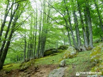 Castañar de El Tiemblo; senderismo semana santa; viajes de senderismo;batuecas sierra de francia